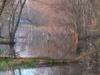 73vernalpondinspring-150x150-jpg