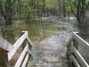 flood-stepstobottomlandforesttrail2008april-300x221-jpg
