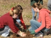 Carp Lake Tree Planting
