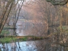 Spring Vernal Pond