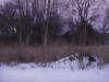 Winter Night Beaver Lodge