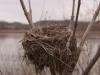 Fall Bird Nest