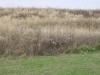 The Prairie Before the Burn