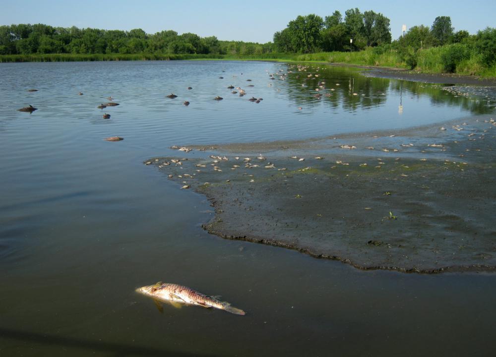 Drought Fish Kill of 2012