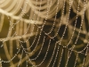 Spider Web and Dew