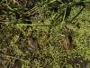 Five Leopard Frogs