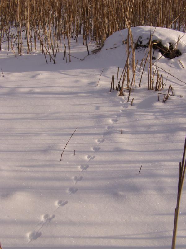 Mice Tracks