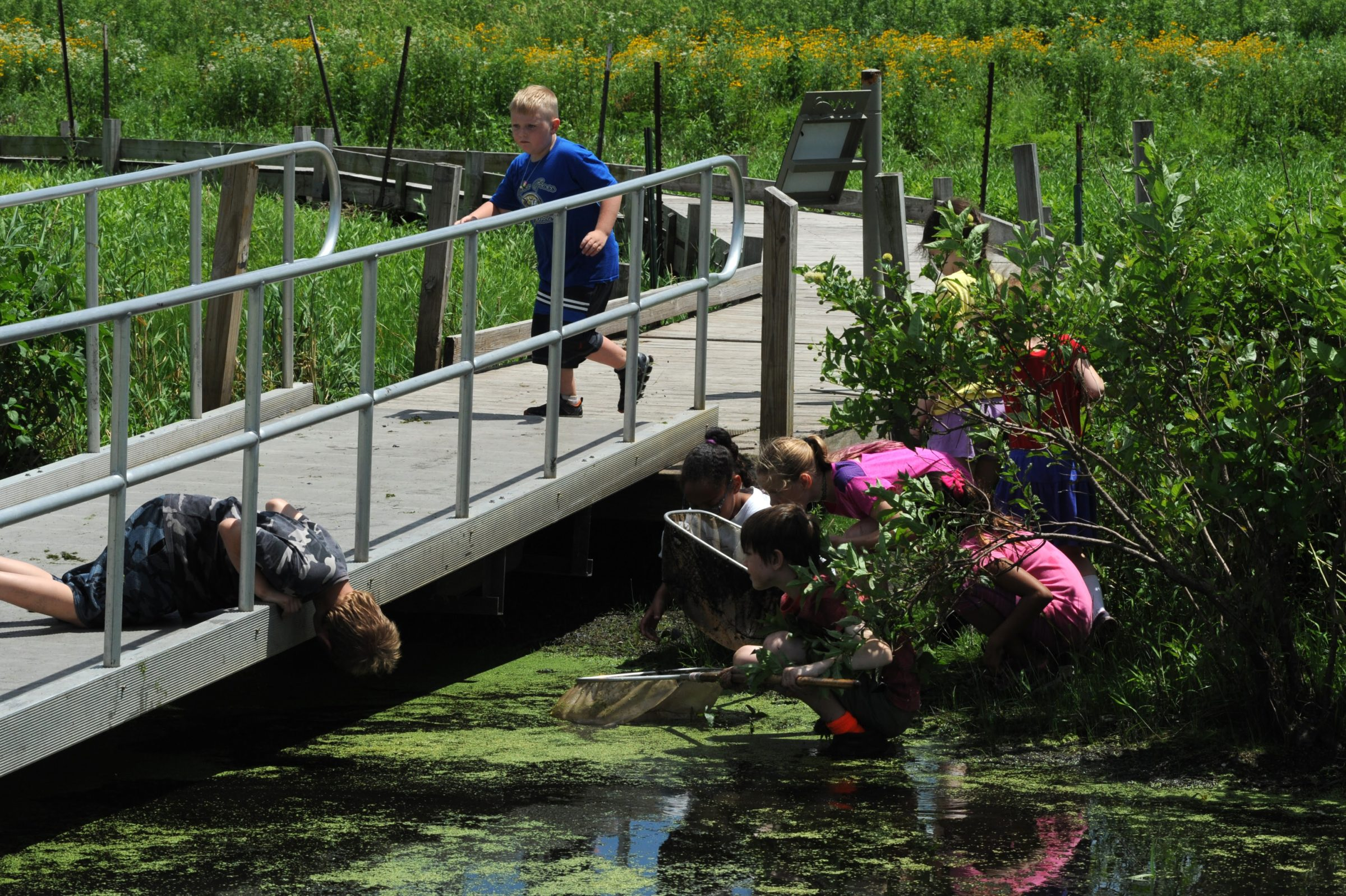 Children looking for the frog they hear on a bridge over the marsh